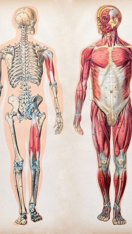 Musculoskeletal Anatomy & Physiology